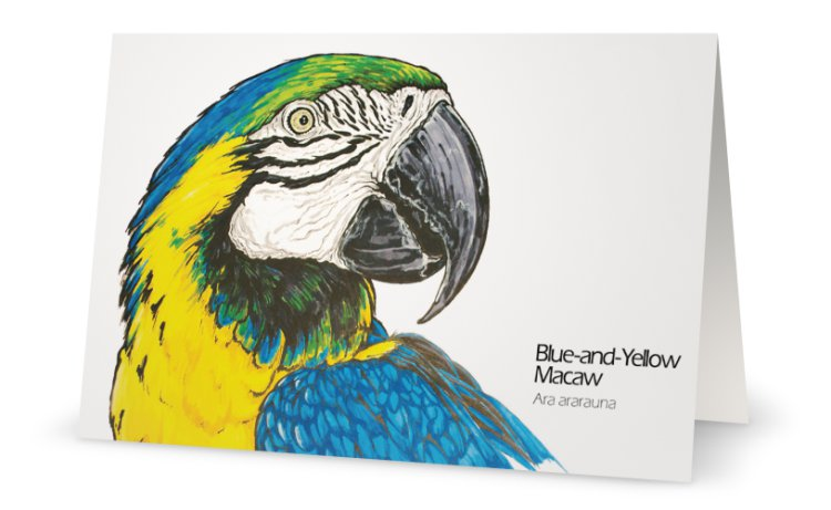 Blue and yellow macaw drawing greeting card