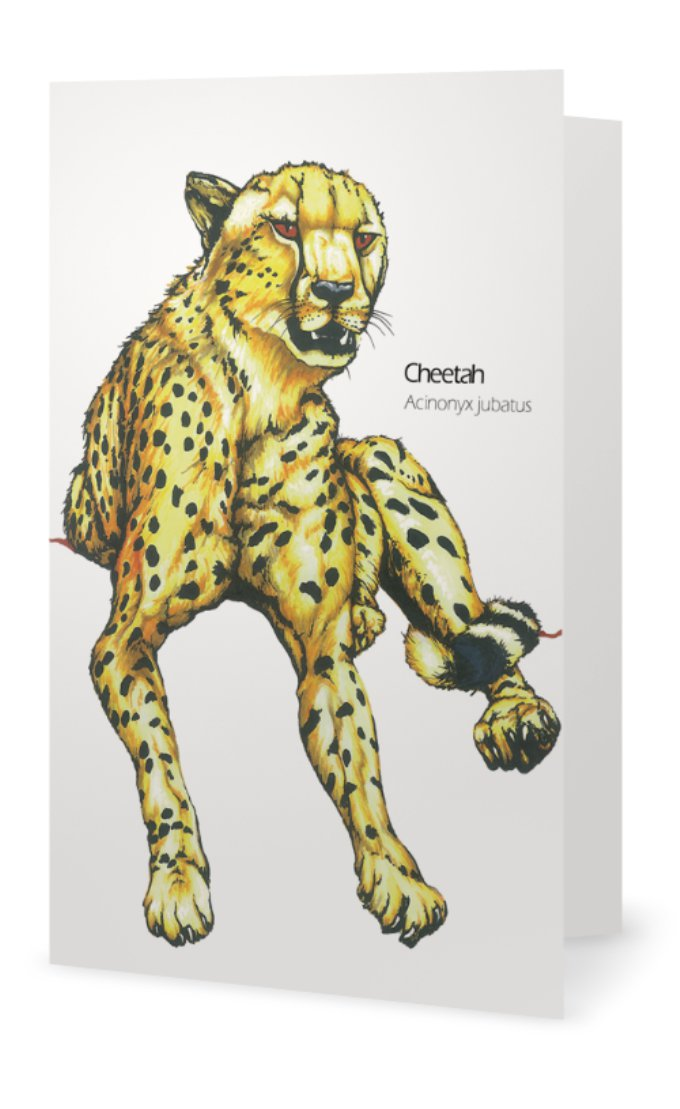 Cheetah drawing greeting card