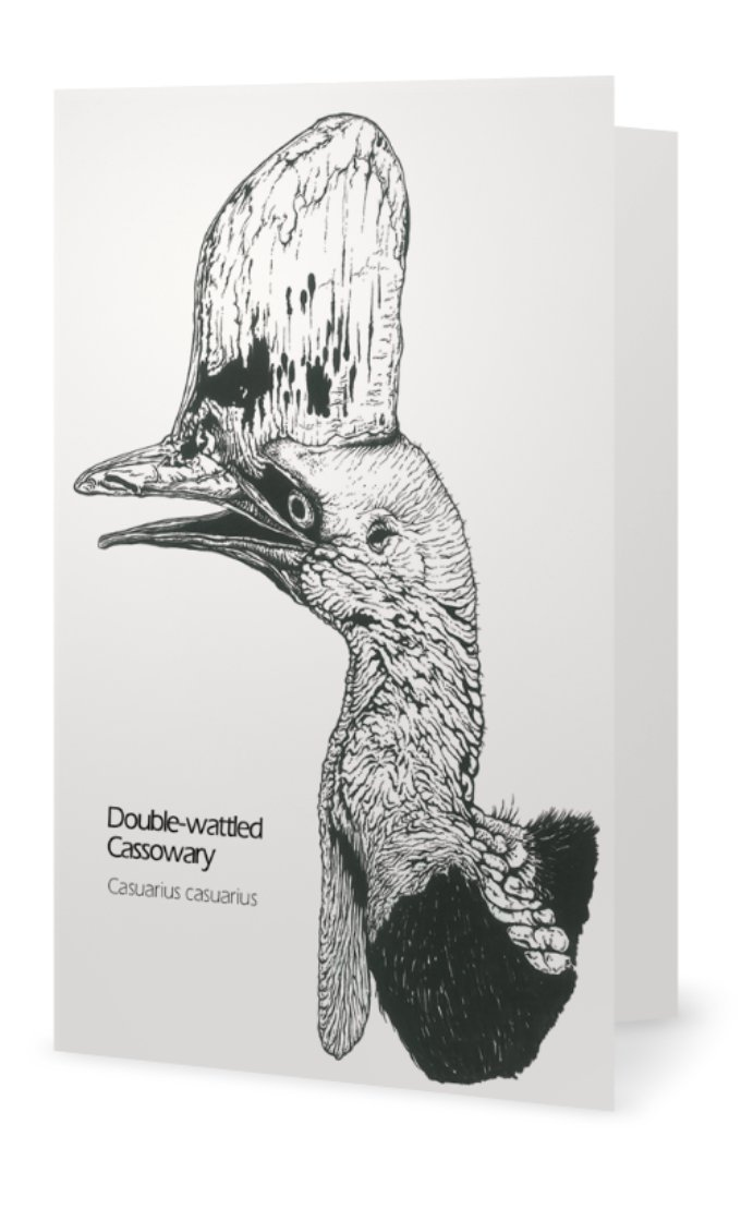 Double-wattled cassowary drawing greeting card