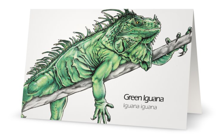 Green iguana drawing greeting card
