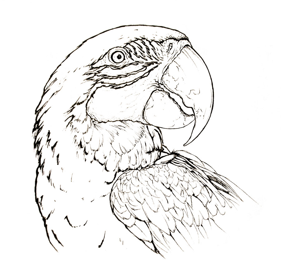 Macaw Coloring Pages - Coloring Pages Ideas & Reviews