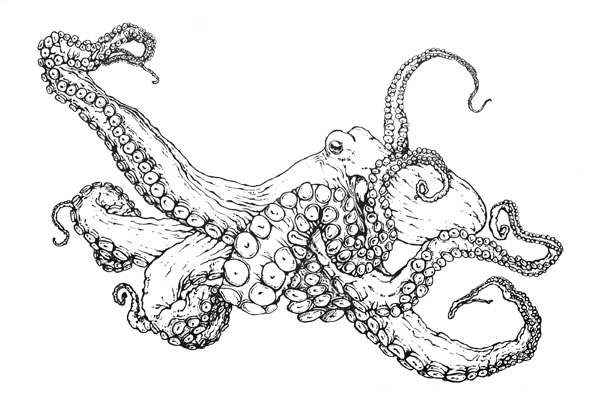 Charmant Common Octopus