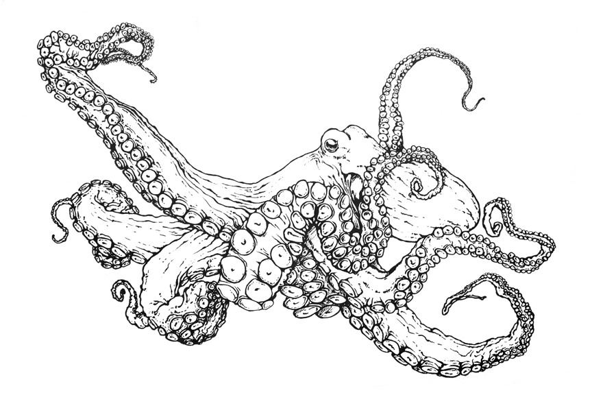 Superbe Common Octopus Coloring Page